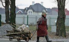 Жители Коми смогут получить дрова бесплатно
